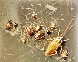 How To Get Rid Of Baby Roaches In The Kitchen | Wow Blog