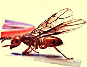 Flying Termites Pictures How To Get Rid Of Them